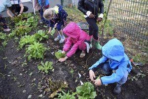Inakindergarten, Beitragsbild News Kita Finchleystraße Ernte