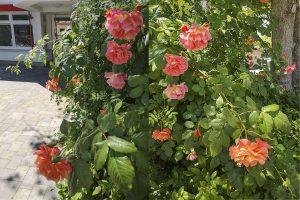 Beitragsbild INA.KINDER.GARTEN Kita Flurweg Blumen